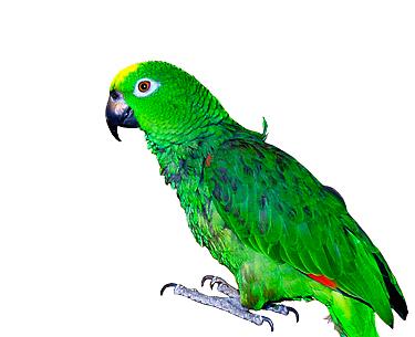 datafamiljen-papegoja-r